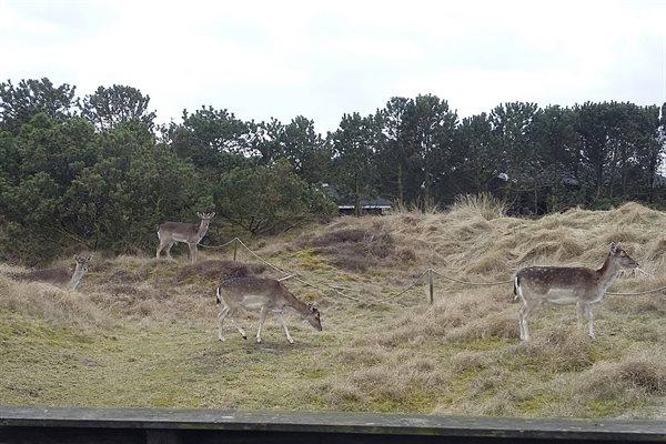 Ferienhaus 28-4177 - Hausfoto 2