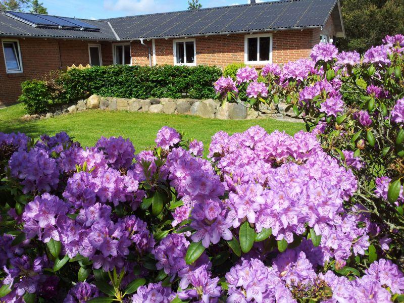 Ferienhaus 1184 - Hausfoto 1